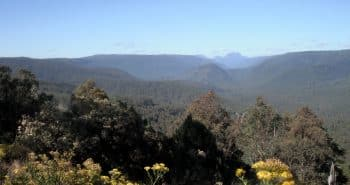 La forêt primaire de Tasmanie