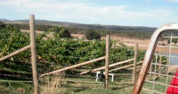 Les vendanges et Wwoof en Tasmanie