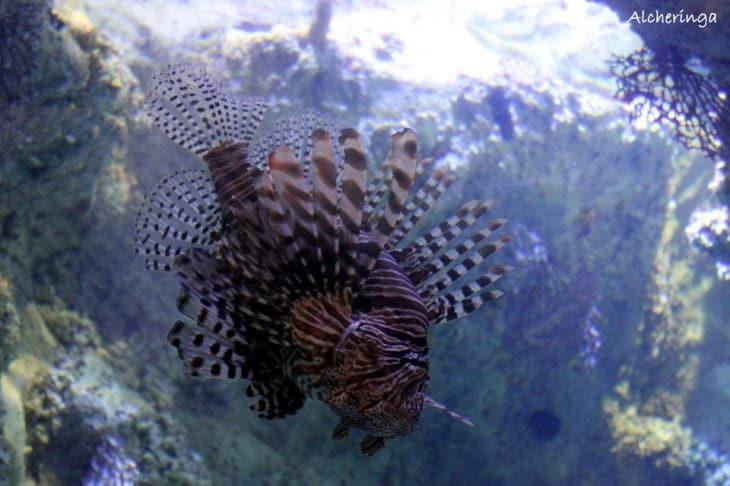 L'aquarium de Sydney et ses poissons atypiques