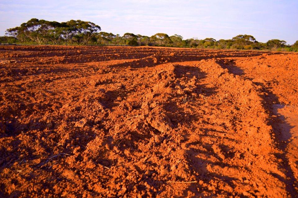 Une ferme australienne
