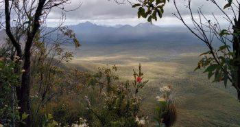 Conservation des plantes à l'Ouest de l'Australie