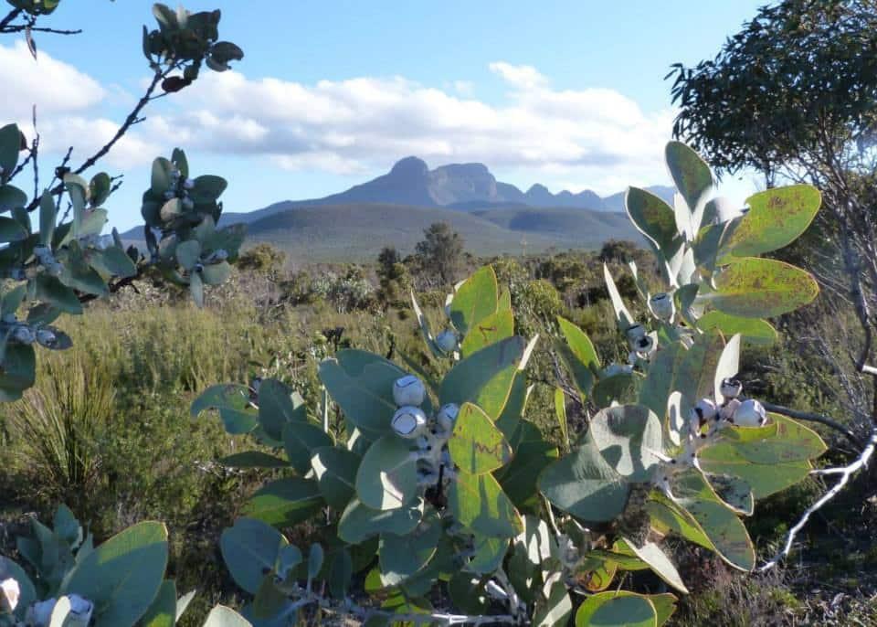 Biodiversité de l'Ouest australien