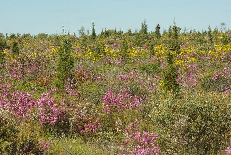 La diversité de plantes de l'Australie